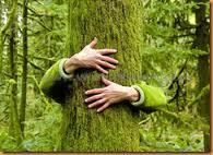faire un câlin à un arbre pour s'ancrer